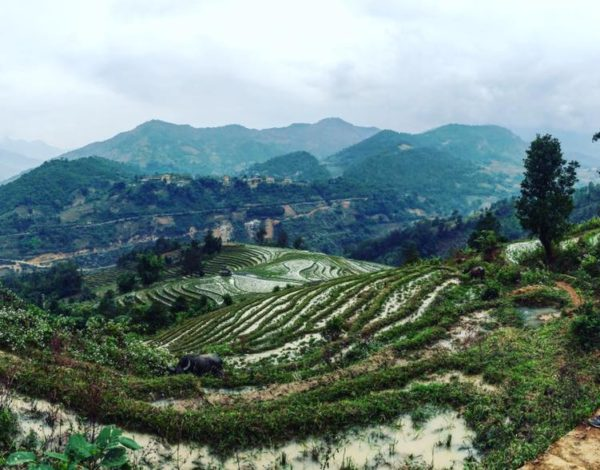 Trekking in Sapa w/ Vietnam Backpackers' Hostels