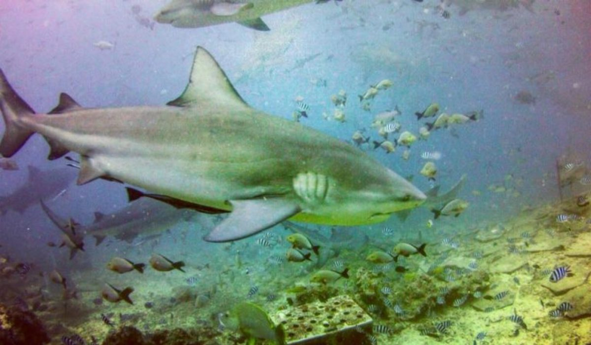 The Many Important Reasons To Ban Shark Finning